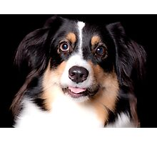 Portrait of a Pet Photographic Print