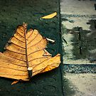 Pave the way by Angie Muccillo