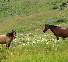 Horses in Crested Butte by Teresa Smith