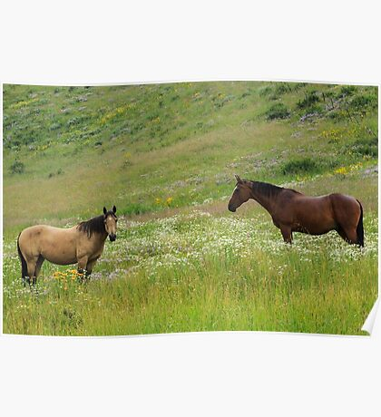 Horses in Crested Butte Poster