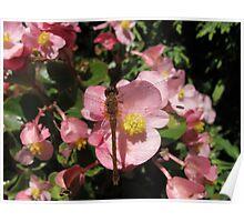 Dragonfly's Den Poster