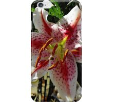Star Gazer iPhone Case/Skin