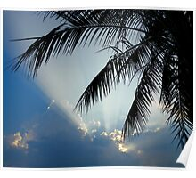 Palm Tree at Sunset Poster