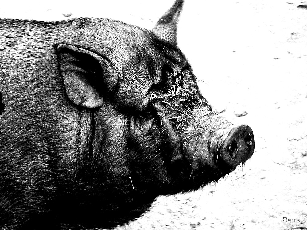 You calling ME Pigheaded ? by Berns