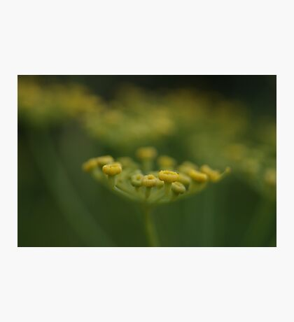 swaying in the wind Photographic Print