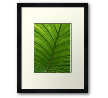 #100  Green Leaf Macro Framed Print