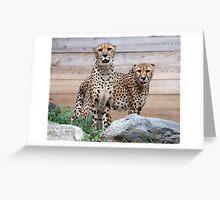 Cheetah brothers Greeting Card