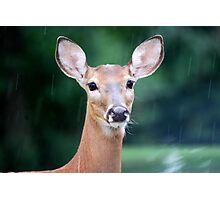 Deer Me, I Think it is Going to Rain Photographic Print