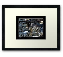 """Vision Quest""  Grey Wolf Framed Print"