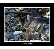 """Vision Quest""  Grey Wolf Photographic Print"
