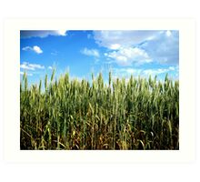 Green Wheat - Mansfield, Washington USA Art Print