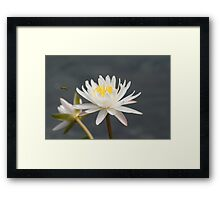 Coming in for a landing. Framed Print