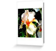 Peach Iris Flower Greeting Card