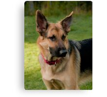 The Lovely Gracie Canvas Print