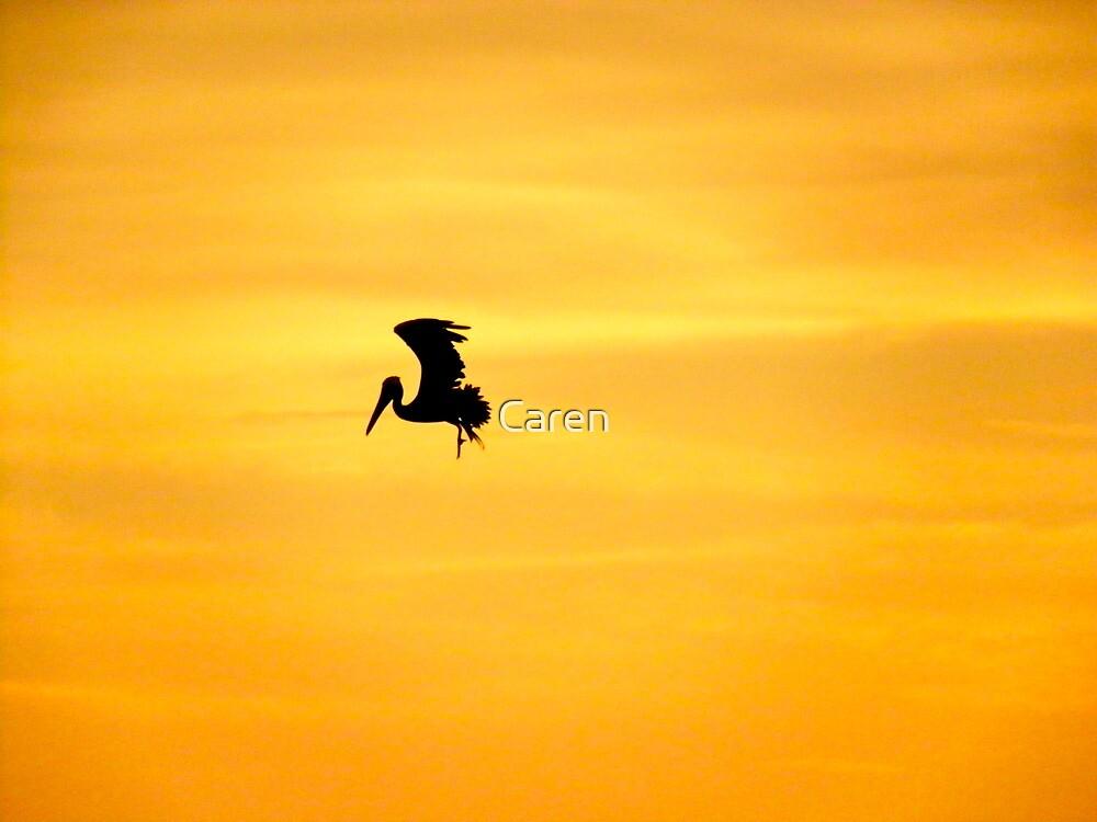 Pelican Silhouette  by Caren