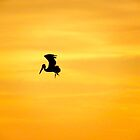 Pelican Silhouette  by Caren Grant