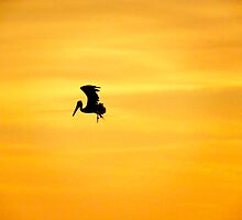 Pelican Silhouette  by Caren