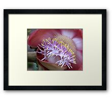 Cannon Ball Flower. Framed Print