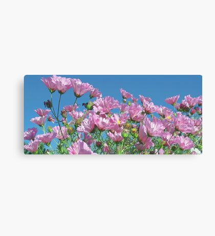 Pink Cosmos - Blue Sky Canvas Print