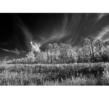 In The Clearing Photographic Print