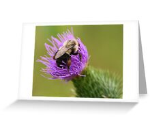 Bumblebee on a Thistle Greeting Card