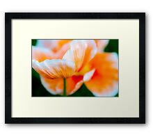 Orange Haze Framed Print