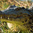 Chobe National Park, Botswana. 2009 III by Damienne Bingham