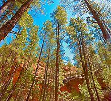 Tall trees of Arizona by LudaNayvelt
