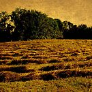 Hayfield of Gold by Debbie Robbins