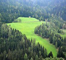 Mountain meadow in Wipptal - Austria by Arie Koene