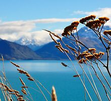 Looking through the Grass, Lake Wakatipu, South Island, New Zealand by Chris Jones