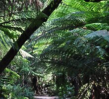 Fern Gully - Grant's Picnic Ground, Mt Dandenong by EJPhotography