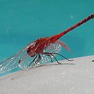 Red Dragonfly III by taiche