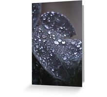 Crystal Dew - Macro Dew Drops Greeting Card