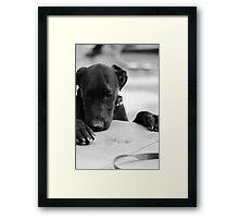 Clide Framed Print