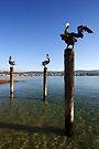Merimbula Lake by Darren Stones