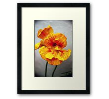 A photo a day keeps the troubles away Framed Print