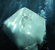 The Ray is smiling at me! by Nickie Harris