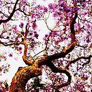 Jacaranda trees by Ebony Jane