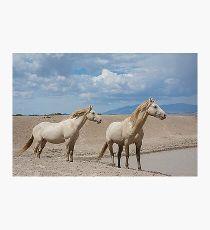 The Cremello Brothers  Photographic Print