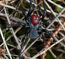 Mouse Spider by Barb Leopold