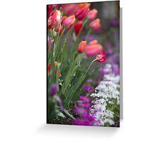 Spring tulips in bloom Greeting Card
