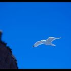 Jonathan Livingston Seagull by Tim Topping