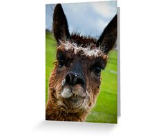 Wacky Alpaca Greeting Card
