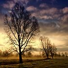 Willows at Sunrise by Kathy Wright