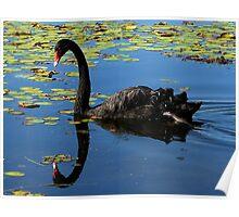 Black Swan - At Speed Poster