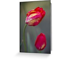 Tulips in motion Greeting Card