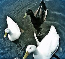 quack harem by vampvamp