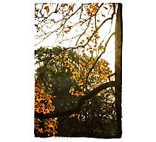 Falling leaves Photographic Print