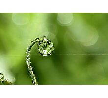 Early Morning Dew Photographic Print